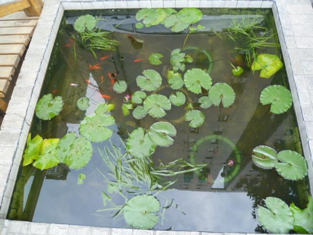 家庭小鱼池设计图