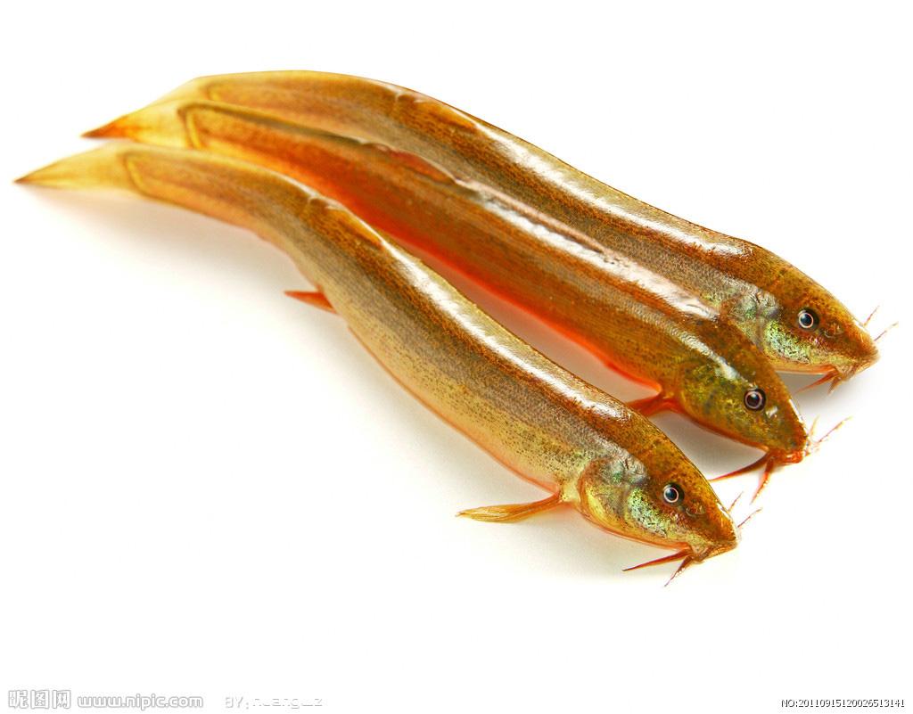 泥鳅有沙鳅、真鳅、黄鳅之分,在我国各地的淡水中都有分布,常生活在水田、池塘、沟渠的静水底层淤泥中,喜食浮游生物、小型甲壳类等,也食植物碎屑、藻类等;泥鳅每年4~8月进入繁殖季节,二龄后的泥鳅性成熟开始产卵,个体越大,产卵量越多。